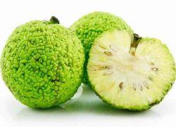 adamo obuolio tinktūra nuo hipertenzijos