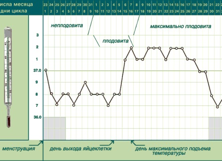 Ano ang basal temperatura sa panahon ng pagbubuntis?